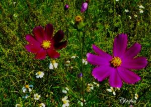 Flores silvestres 007