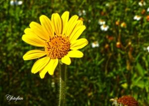 Flores silvestres 036