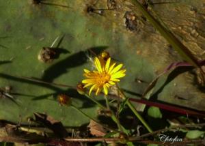 Flores silvestres 047