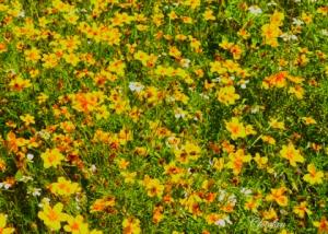 Flores silvestres 048