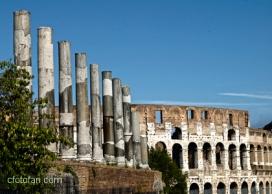 Roma 207