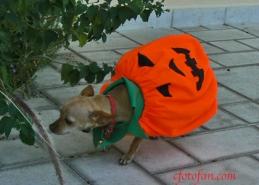 Leia Halloween 001