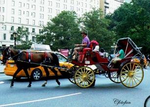 New York 059