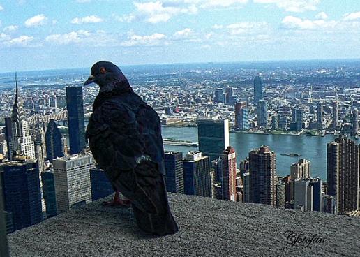 New York 552