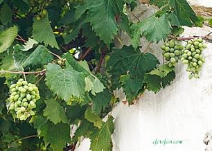 2013-08-27 Alberobello 047