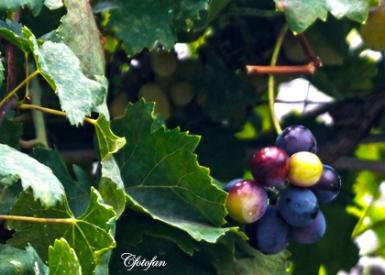 2013-08-27 Alberobello 105