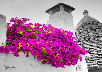 2013-08-27 Alberobello 134