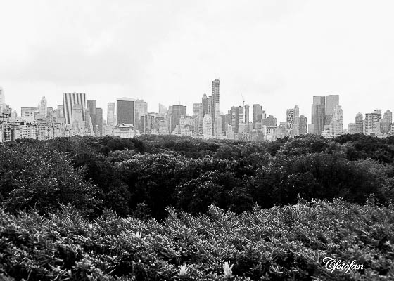 New York 308
