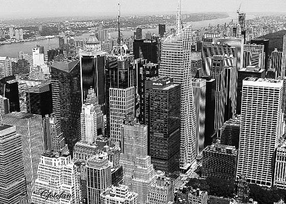 New York 516