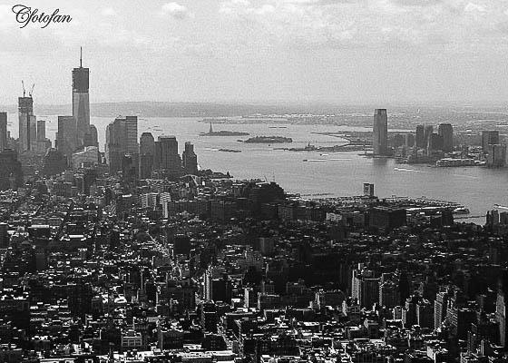 New York 524